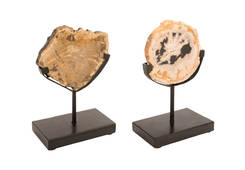 Petrified Slice on Stand / White