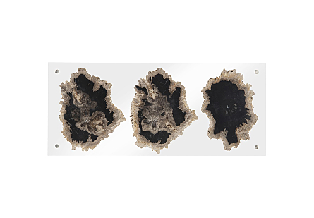 Floating Petrified Triple Slice Wall Art