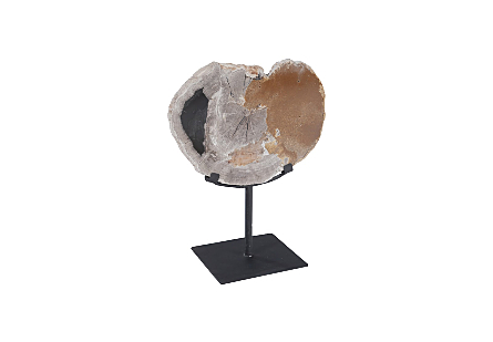 Petrified Wood Slice on Stand Assorted