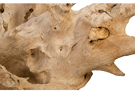 Bleached Teak Root Sculpture