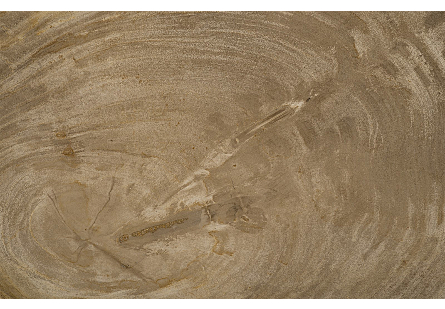 Petrified Wood Tray Stainless Steel Base, Assorted Styles and Sizes