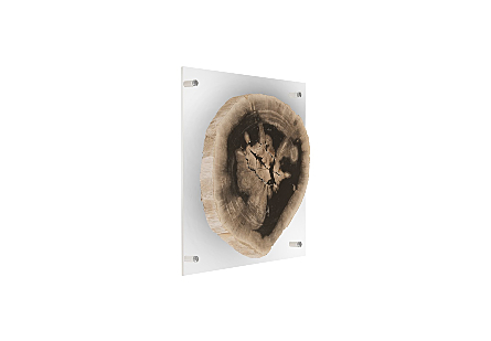 Floating Petrified Slice Wall Art Assorted