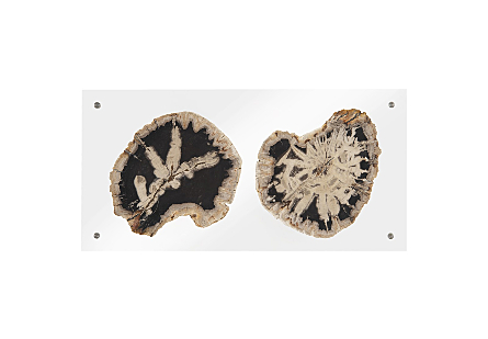 Floating Petrified Double Slice Wall Art