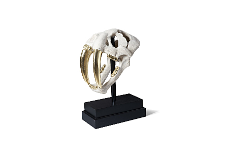 angled view of the Phillips Collection White Saber Tooth Tiger Skull a white decorative sculpture finished in white with gold leaf teeth