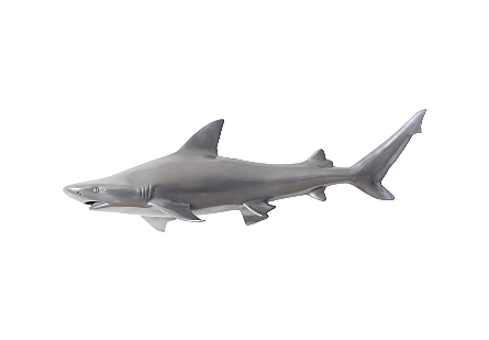 Black Tip Reef Shark Polished Aluminum