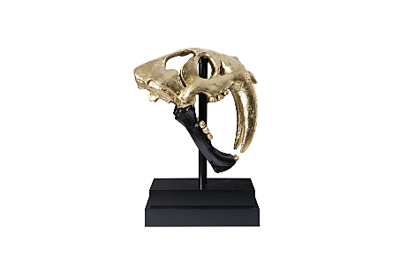 Saber Tooth Tiger Skull Black, Gold Leaf