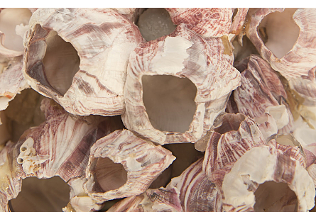 Barnacle Cluster Wall Art MD
