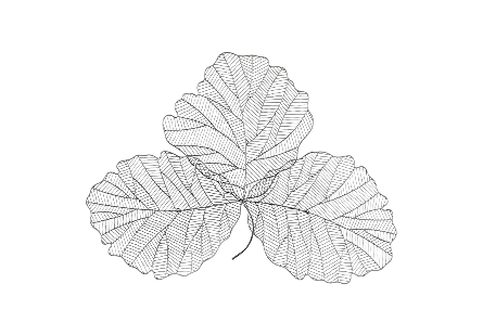 Tri Leaf Silver / Black, MD