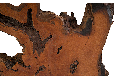 Mai Theng Root, Burl Coffee Table, SS Legs