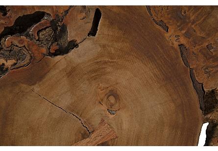 Makha Burl Wood Side Table