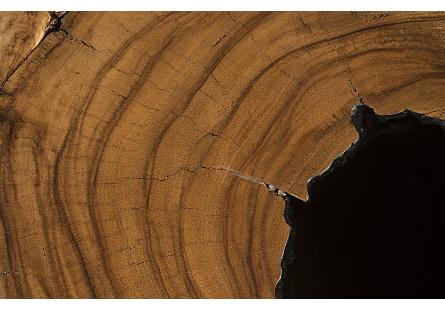 Chamcha Wood Side Table Burnt Edge