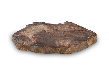 Petrified Wood Coaster
