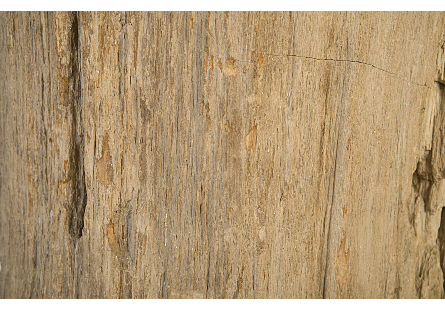 Petrified Wood Stool Colossal