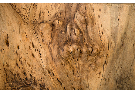 Burled Wood Coffee Table